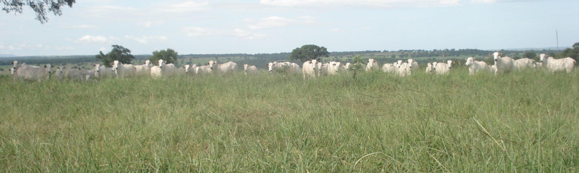Fazenda com 720 hectares no Município de Corguinho
