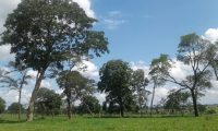 Fazenda Permuta Mato Grosso do Sul